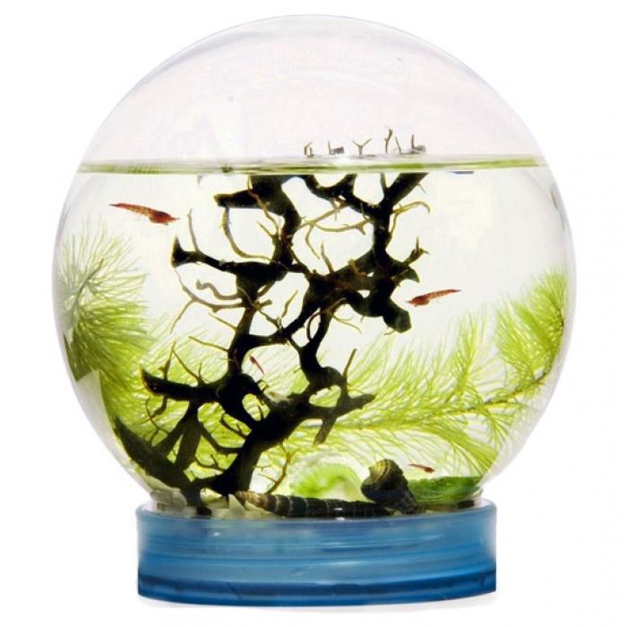 Живая экосистема с креветками